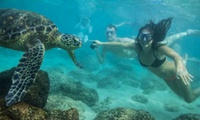 Turtle Eco Tour with 60 Minutes of Snorkeling for One, Two, or Four from Hawaii Turtle Tours (Up to 58% Off)